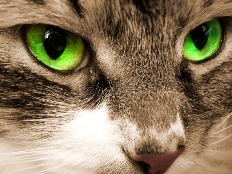 Occhi verdi di un gatto immagini stock libere da diritti