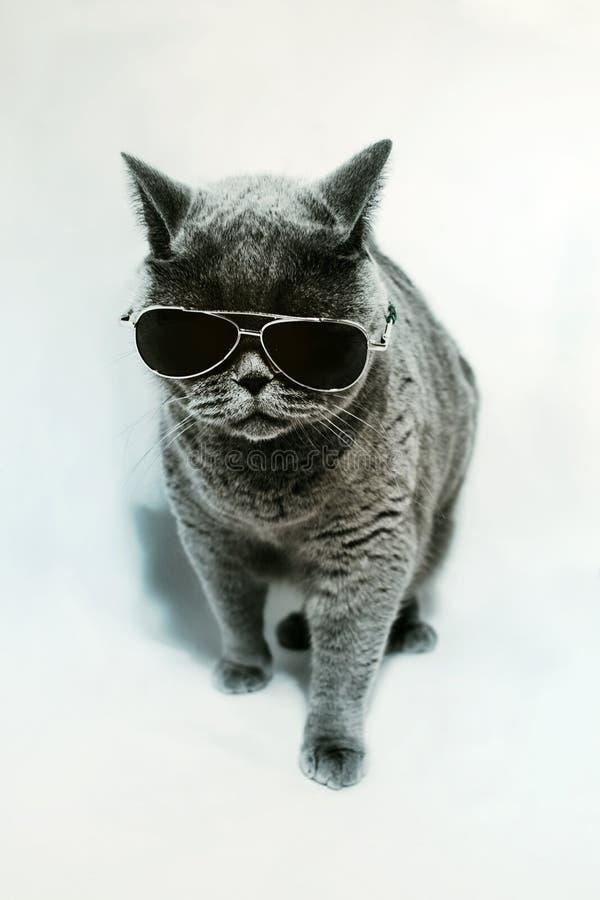 Occhiali da sole da portare del gatto immagine stock
