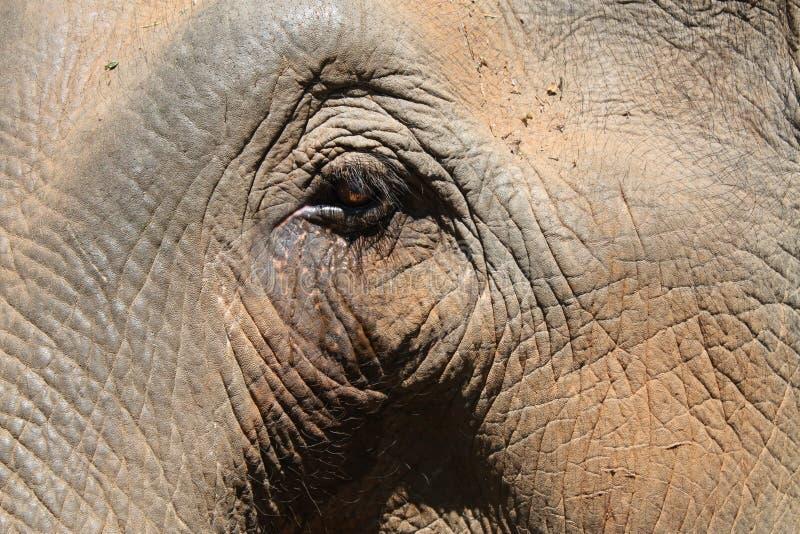 Occhio (asiatico) dell'elefante fotografie stock libere da diritti
