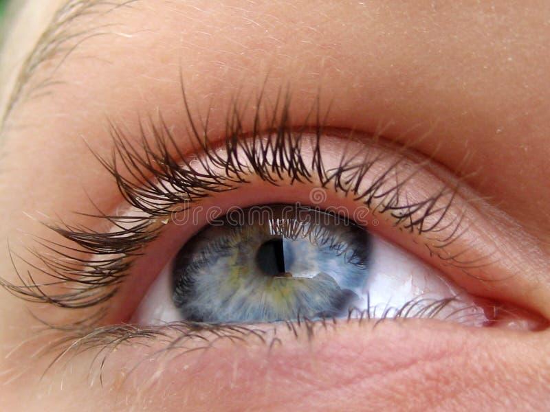 Occhio azzurro fotografia stock