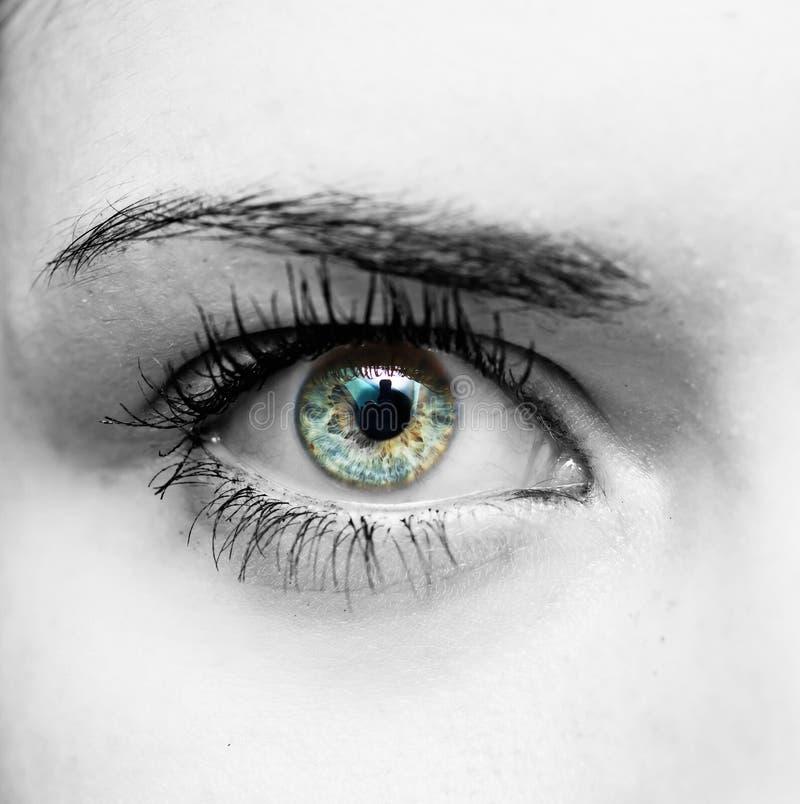 Occhio azzurro dell'occhio della donna bello giovane? fotografia stock libera da diritti