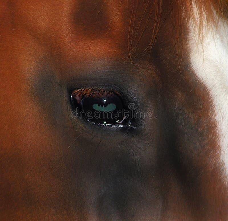 Occhio dei cavalli fotografia stock libera da diritti