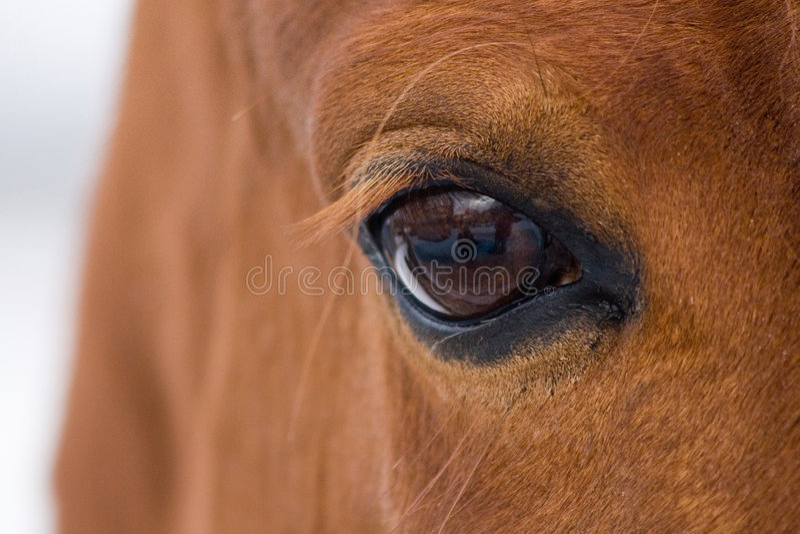 Occhio del cavallo immagini stock libere da diritti