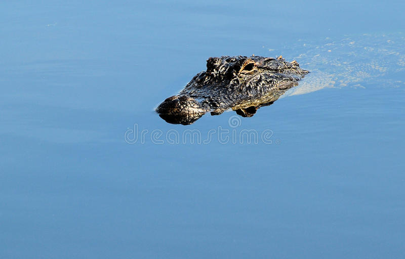 Occhio del coccodrillo che riflette in acqua immagini stock