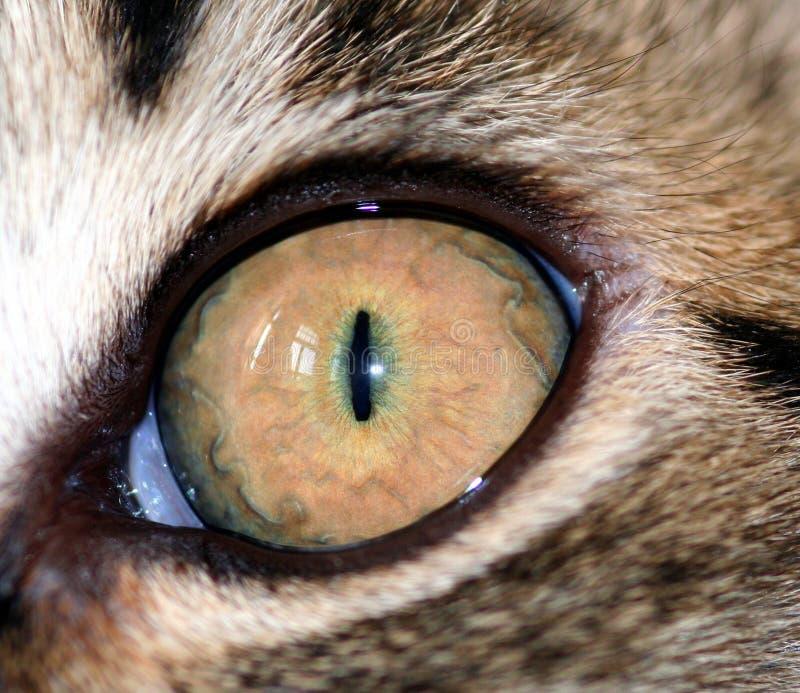 Download Occhio del gatto fotografia stock. Immagine di gatto, brown - 450038