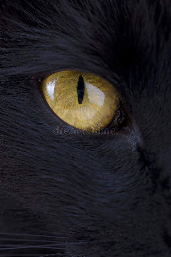 Occhio del gatto nero fotografie stock