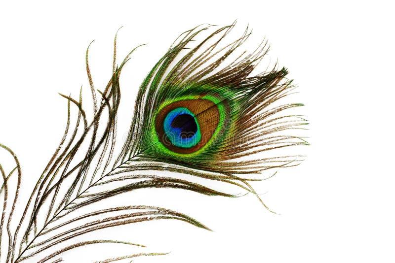 Occhio della piuma del pavone fotografia stock