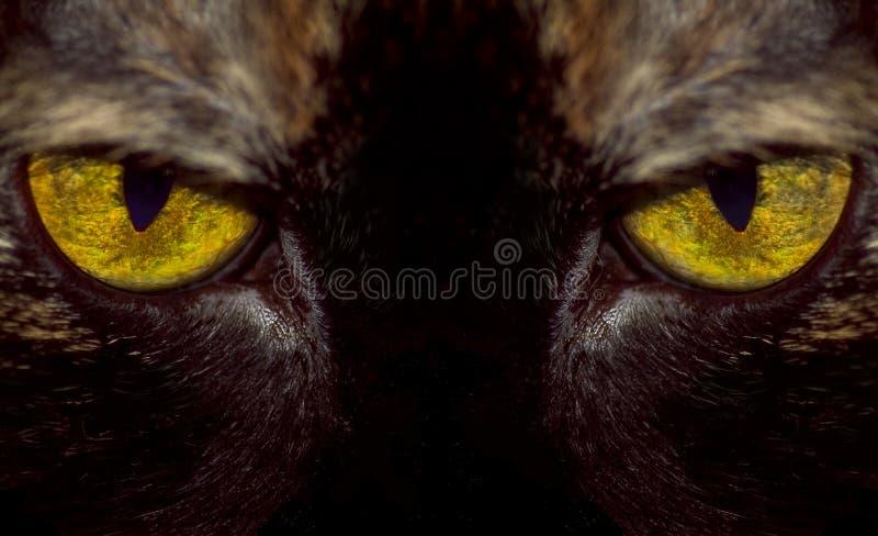 Occhio della tigre immagine stock libera da diritti
