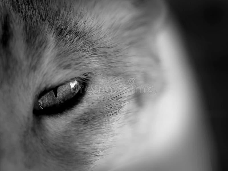 Occhio di gatti immagini stock libere da diritti