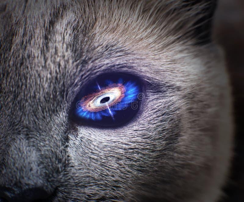 Occhio di gatto misterioso con la galassia porpora dentro fotografia stock libera da diritti