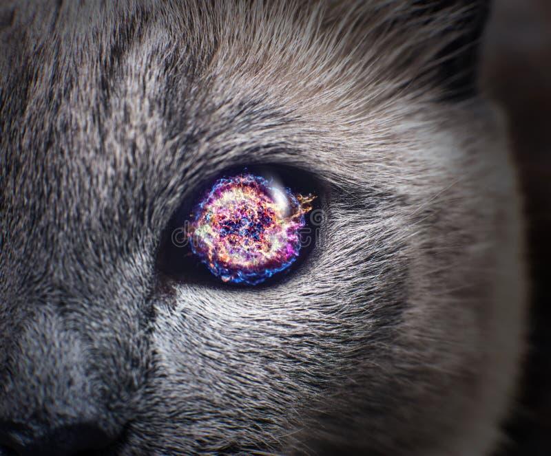 Occhio di gatto misterioso con la galassia porpora dentro immagini stock libere da diritti