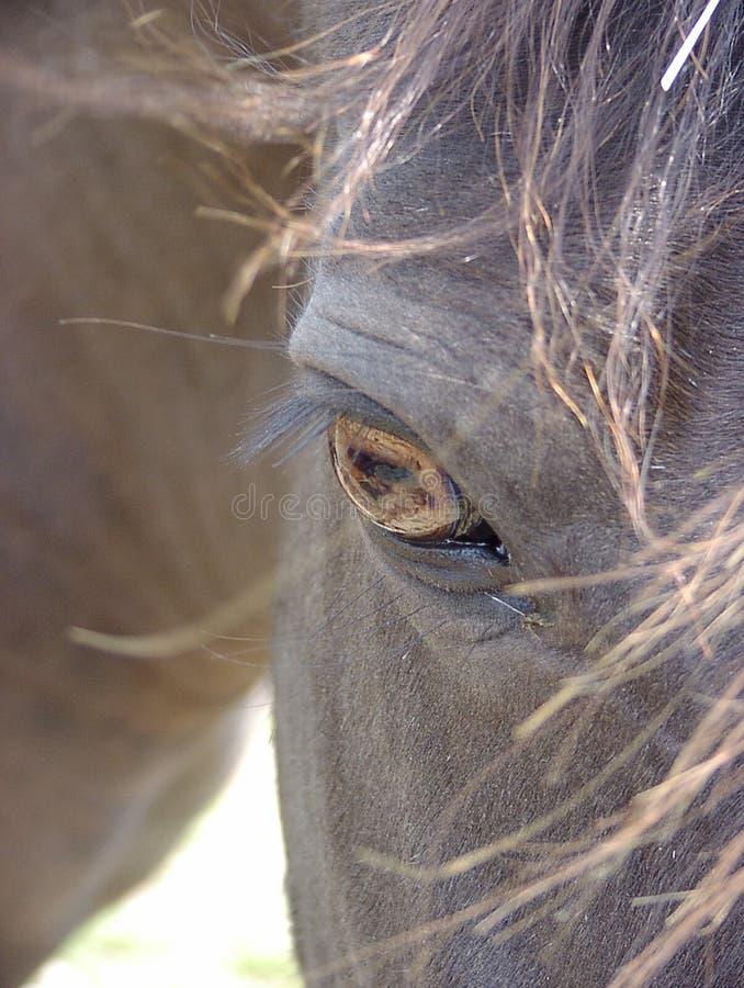Occhio di un cavallo nero di Smokey fotografia stock libera da diritti