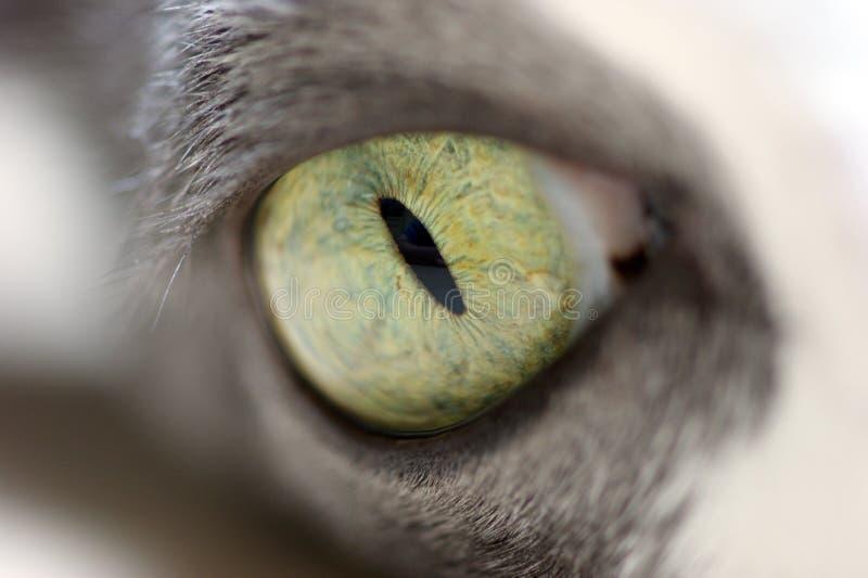 Occhio di un gatto immagini stock