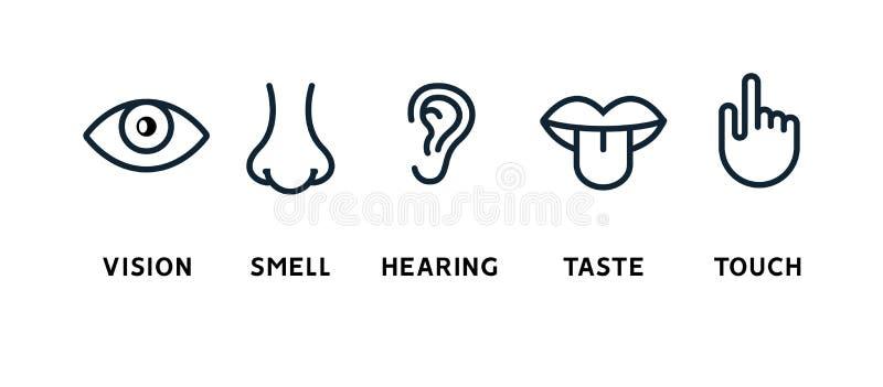 Occhio di visione di cinque sensi, naso dell'odore, orecchio di udienza, mano di tocco, bocca di gusto e lingua umani Linea icone royalty illustrazione gratis