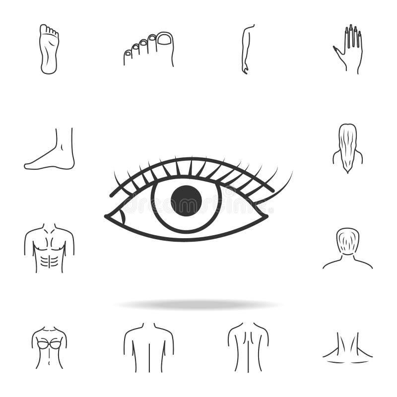 Occhio femminile caucasico spalancato con l'icona del sopracciglio Insieme dettagliato delle icone umane della parte del corpo Pr illustrazione di stock