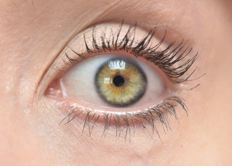 Occhio umano fotografia stock
