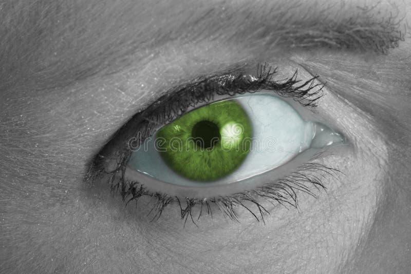 Occhio verde che lo esamina fotografia stock