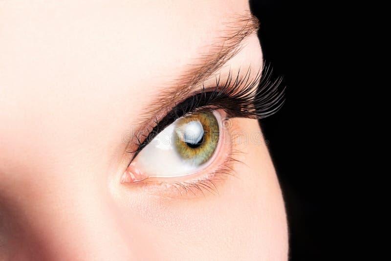 Occhio verde femminile con i cigli lunghi sul primo piano nero del fondo Estensioni del ciglio, laminazione, cosmetologia, oftalm immagini stock