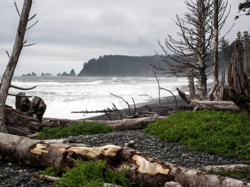 Oceaan die op bos aantasten stock foto's