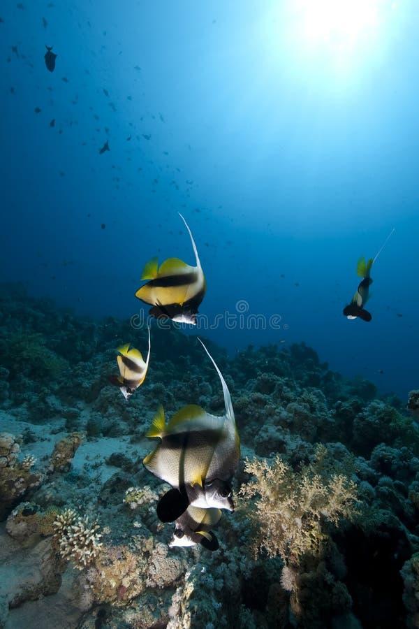 Oceaan en vissen stock afbeeldingen