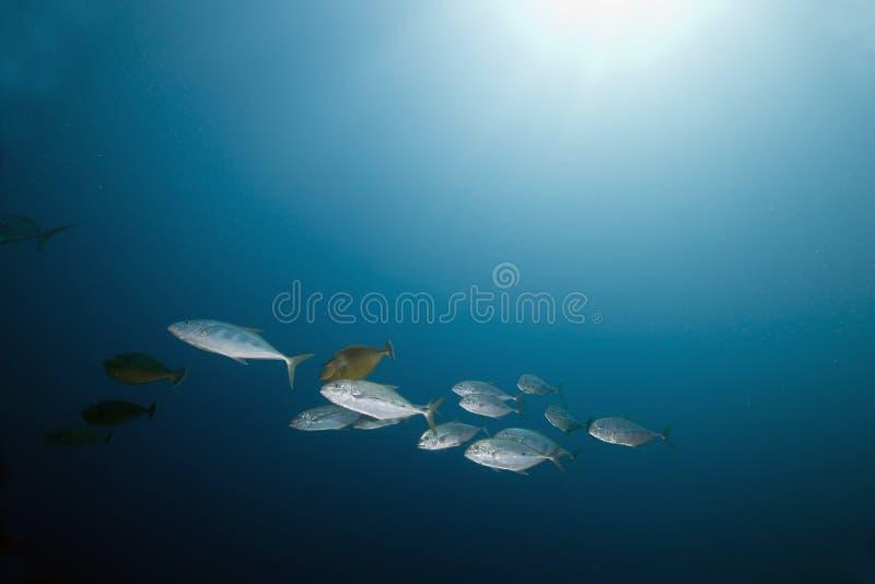 Oceaan en vissen stock foto