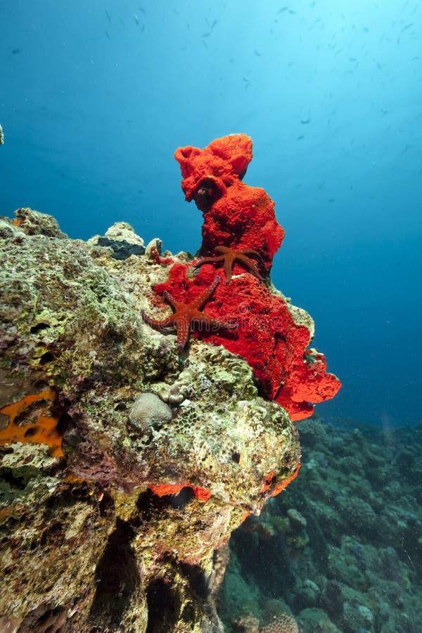 Oceaan en zeester royalty-vrije stock foto