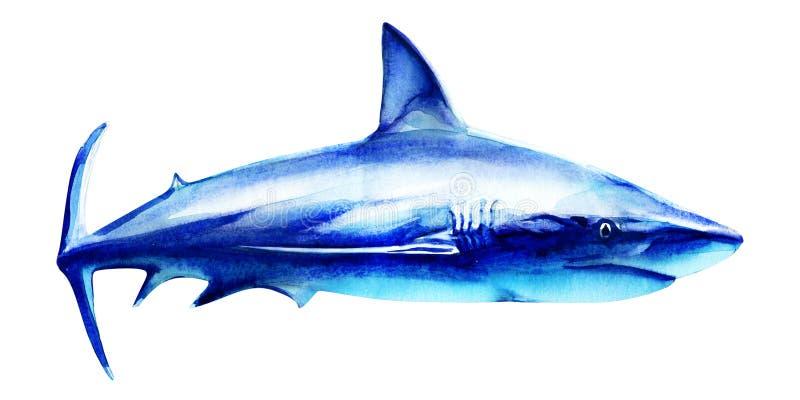 Oceaan grote witte haai in het diepe blauwe water, zijaanzicht, groot vissenroofdier, hand getrokken waterverfillustratie  royalty-vrije stock foto