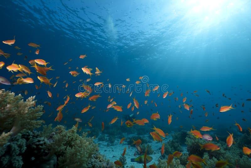 Oceaan, koraal en vissen royalty-vrije stock afbeelding