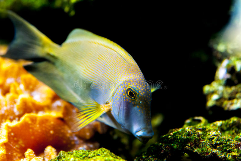 Oceaan, koraal en vissen royalty-vrije stock afbeeldingen