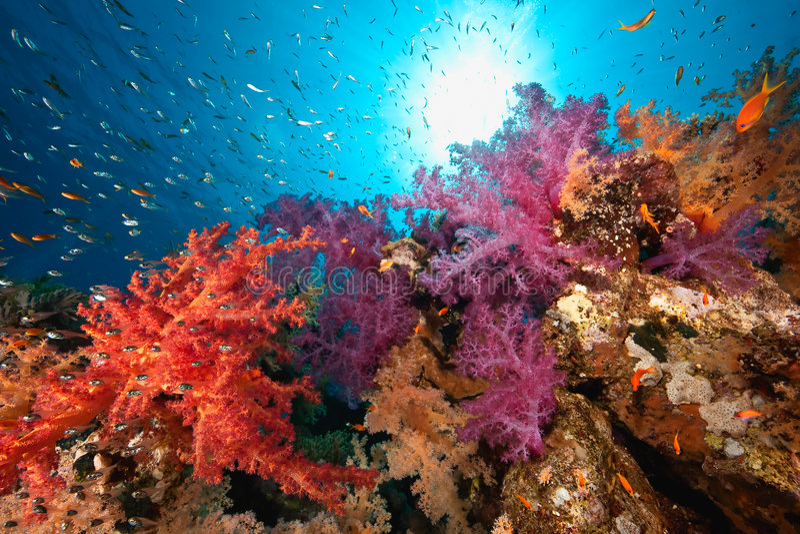 Oceaan, koraal en vissen royalty-vrije stock foto's