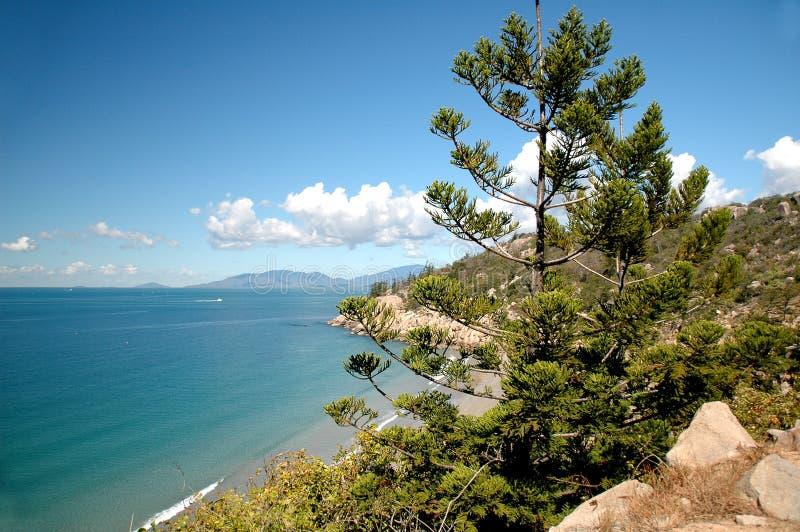 Download Oceaan Mening stock afbeelding. Afbeelding bestaande uit boom - 292547