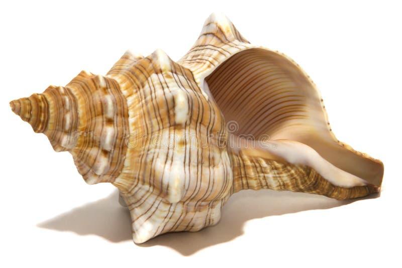 Oceaan spiraalvormige shell op wit royalty-vrije stock afbeelding