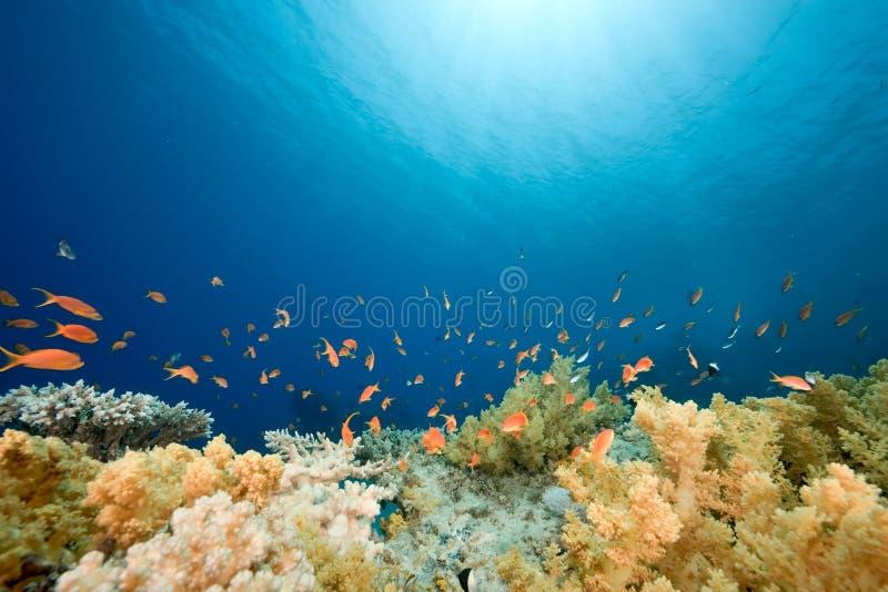 Oceaan, vissen en koraal royalty-vrije stock afbeelding
