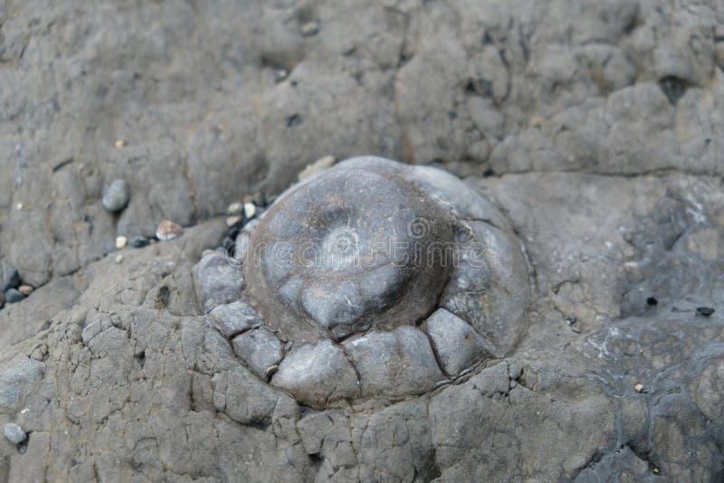 Oceaanfossiel in Patagonië, Chili stock afbeelding