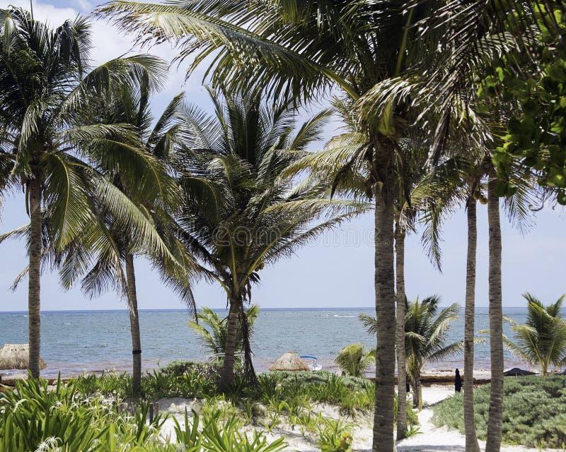 Oceaanmening door palmen stock afbeeldingen