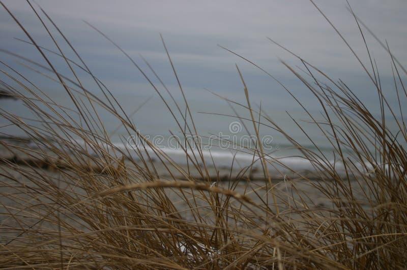 Oceaanriet stock fotografie