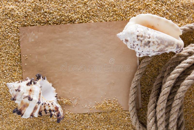 Oceaanshell op het zand royalty-vrije stock foto's