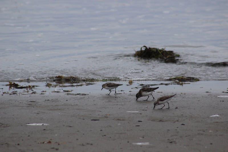 Oceaanvogels royalty-vrije stock fotografie