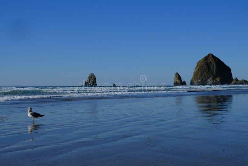 Oceaanzeegezicht met grote rotsvormingen en een zeemeeuw in de voorgrond stock fotografie