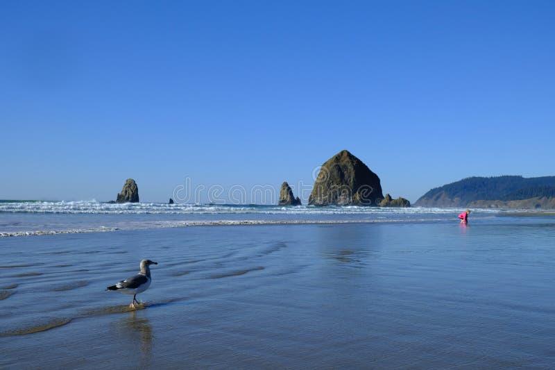 Oceaanzeegezicht met grote rotsvormingen en een zeemeeuw in de voorgrond stock afbeeldingen