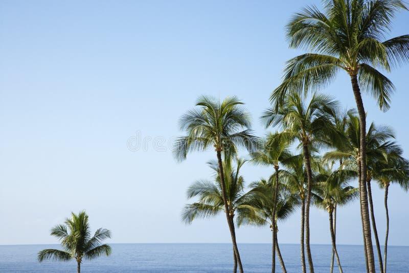 oceanów drzewka palmowe zdjęcie royalty free