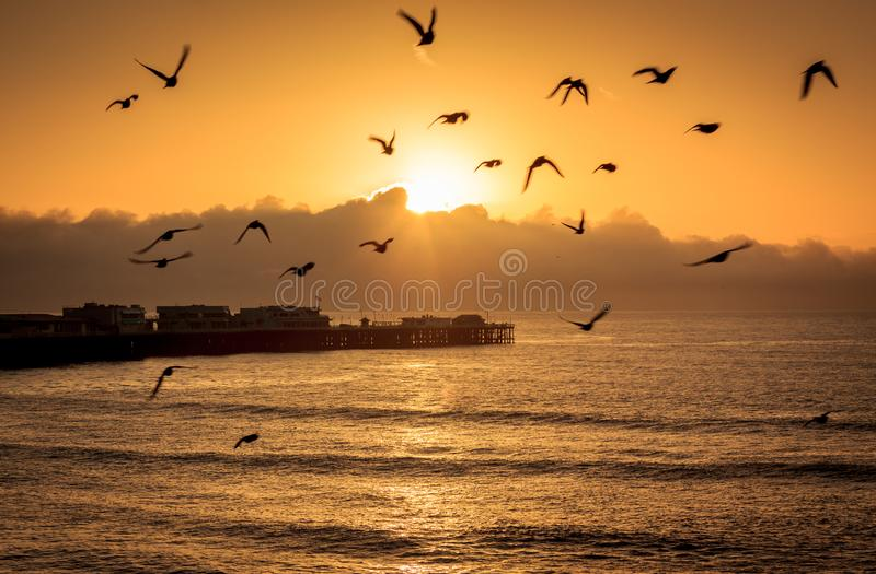 Oceanów ptaki przy świtem zdjęcie royalty free