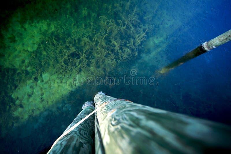 Download Ocean stock photo. Image of coral, down, seaweed, lake - 17580914