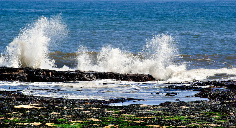 Download Ocean Royalty Free Stock Image - Image: 20207696