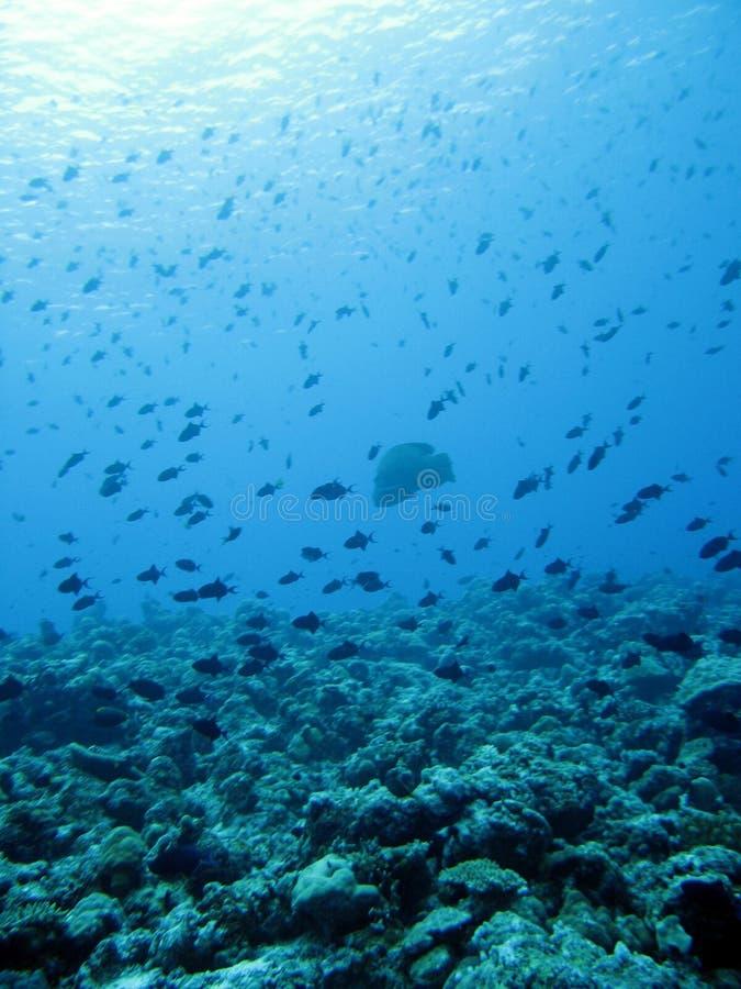 Free Ocean Stock Photo - 2657630