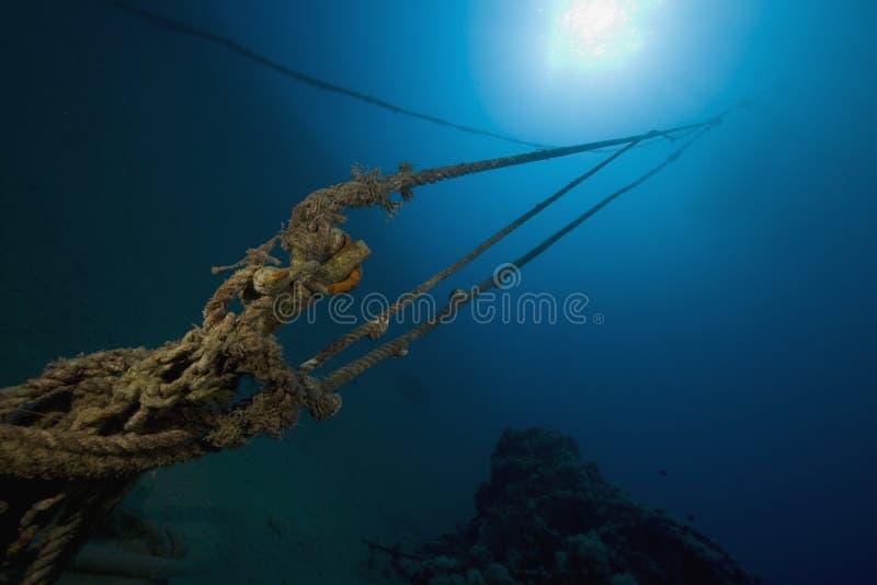 ocean. fotografia stock