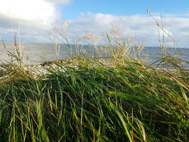 Ocean Bay royalty free stock photos