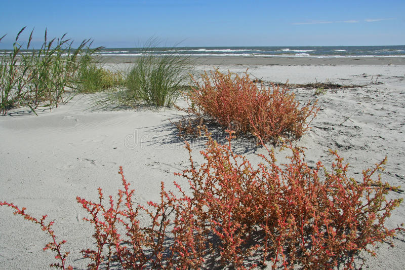Ocean Beach with Plants royalty free stock photo