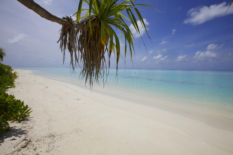Download Ocean Beach Sand With Palm Tree Stock Image - Image of caribbean, beach: 26206771