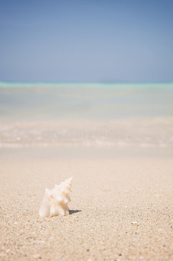 Download Ocean Beach And Shells On A Tropical Holiday Stock Image - Image of shells, conch: 42077667
